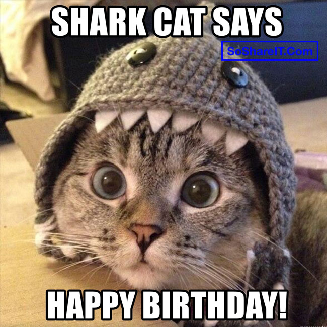 Happy Birthday Cat Meme 1