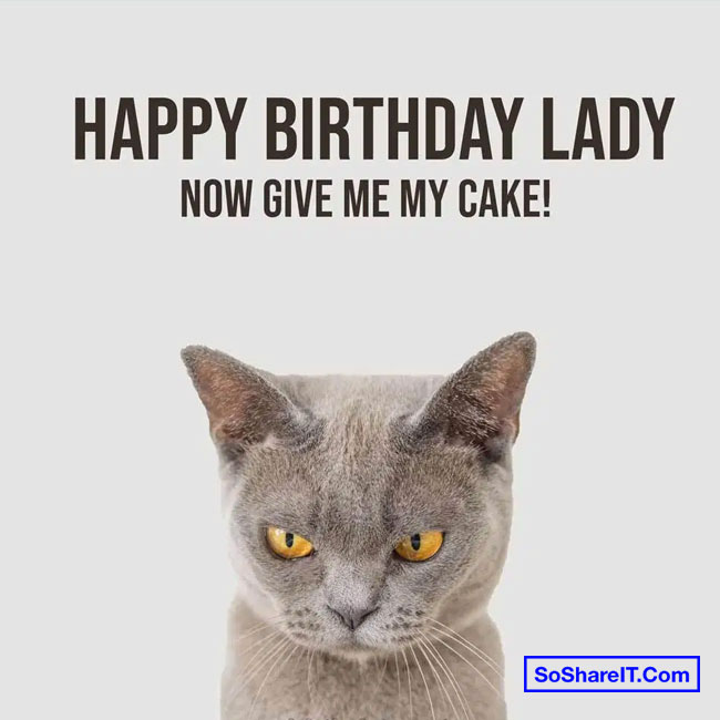 Happy Birthday Cat Meme 10