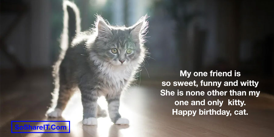 Birthday Cat Quotes